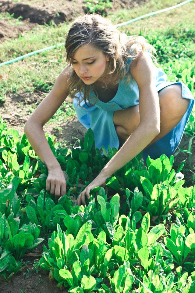 Découvrez les effets bénéfiques du jardinage sur la santé